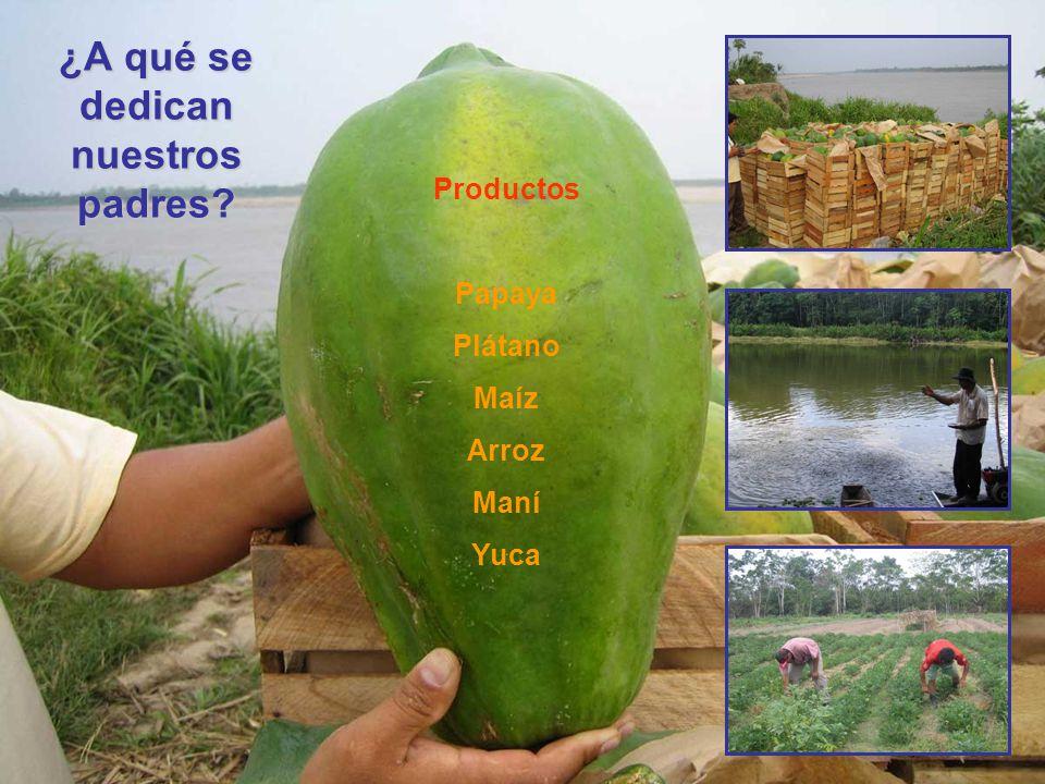 ¿A qué se dedican nuestros padres? Productos Papaya Plátano Maíz Arroz Maní Yuca