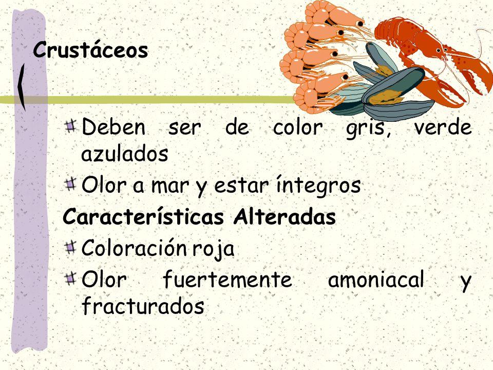 Crustáceos Deben ser de color gris, verde azulados Olor a mar y estar íntegros Características Alteradas Coloración roja Olor fuertemente amoniacal y fracturados