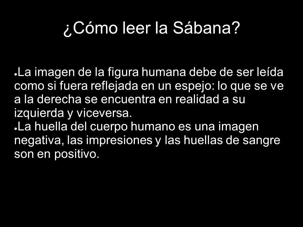 ¿Cómo leer la Sábana? La imagen de la figura humana debe de ser leída como si fuera reflejada en un espejo: lo que se ve a la derecha se encuentra en