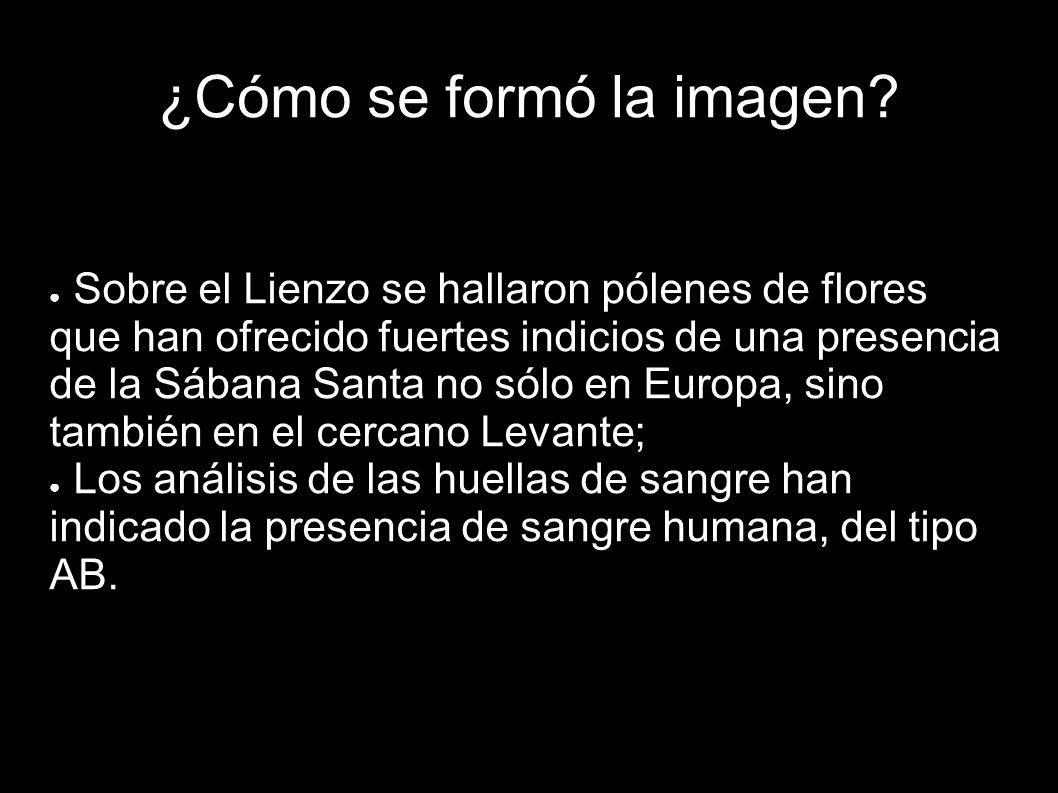 Sobre el Lienzo se hallaron pólenes de flores que han ofrecido fuertes indicios de una presencia de la Sábana Santa no sólo en Europa, sino también en