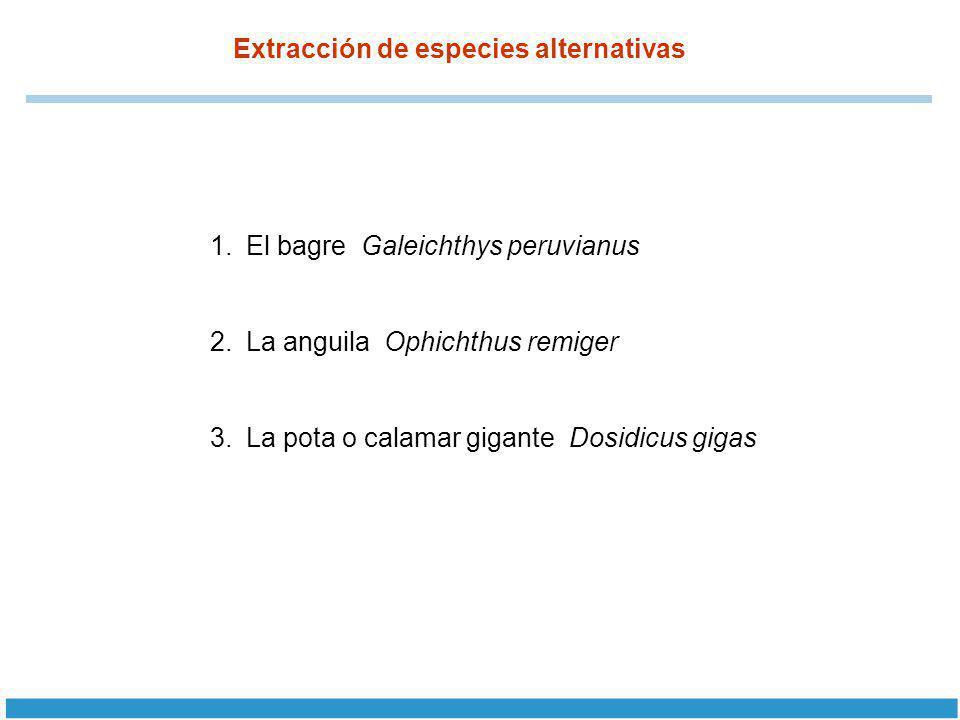 Extracción de especies alternativas 1.El bagre Galeichthys peruvianus 2.La anguila Ophichthus remiger 3.La pota o calamar gigante Dosidicus gigas