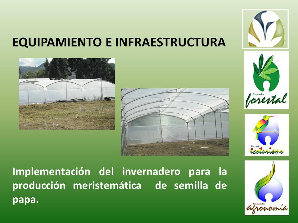 Implementación del invernadero para la producción meristemática de semilla de papa.
