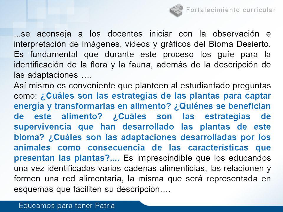 ...se aconseja a los docentes iniciar con la observación e interpretación de imágenes, videos y gráficos del Bioma Desierto. Es fundamental que durant
