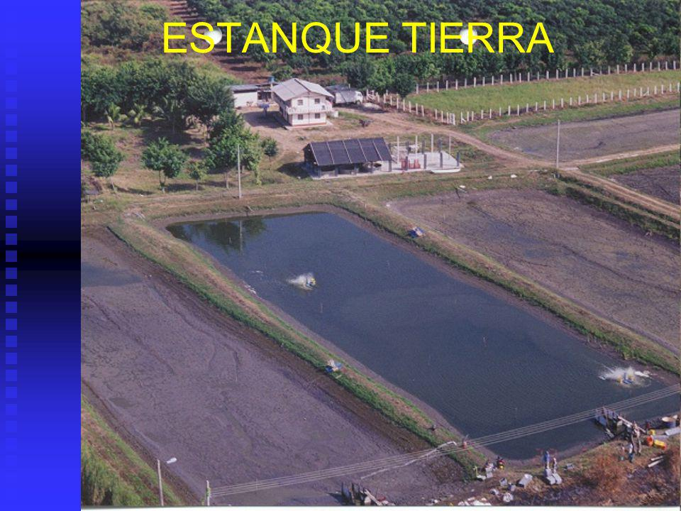 Estanque (a) Piscina: Contenedor de agua retenida por tierra por todos lados exepto por arriba.