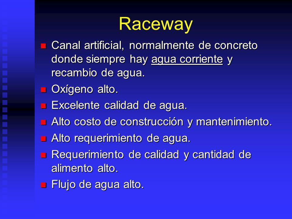 Raceway Canal artificial, normalmente de concreto donde siempre hay agua corriente y recambio de agua.
