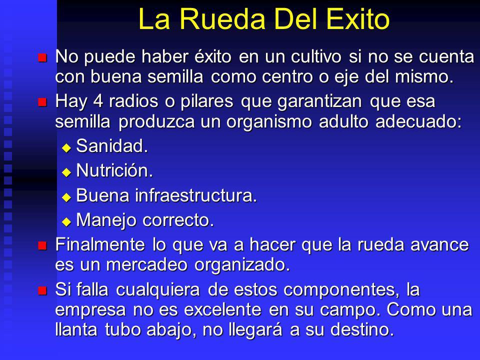 La Rueda Del Éxito. Semilla InfraestructuraNutrición Manejo Sanidad
