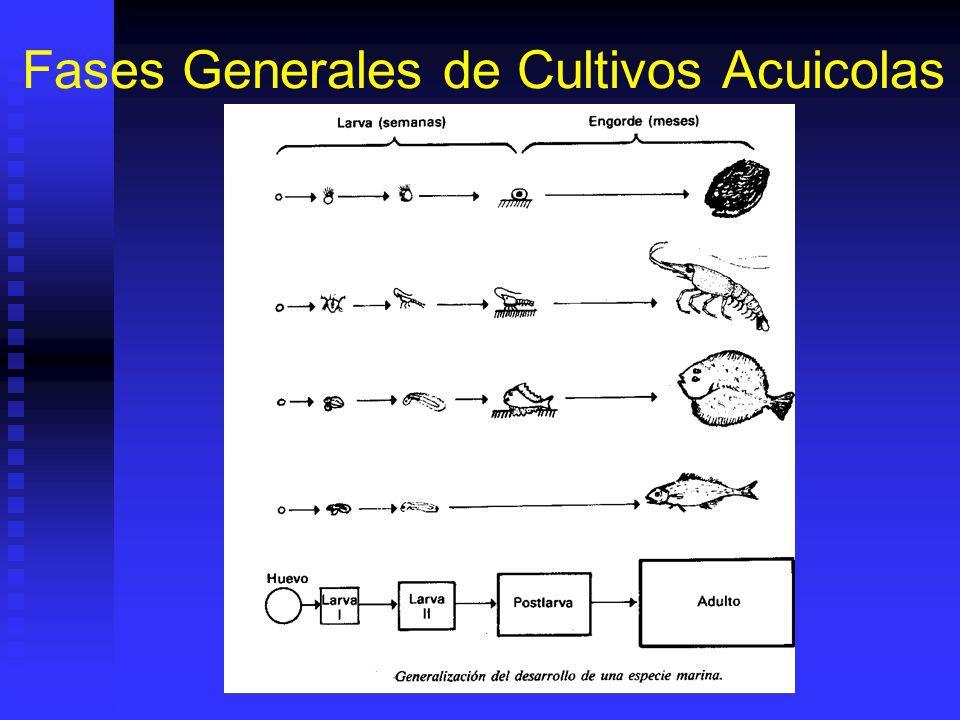 Fases Generales de Cultivos Acuicolas