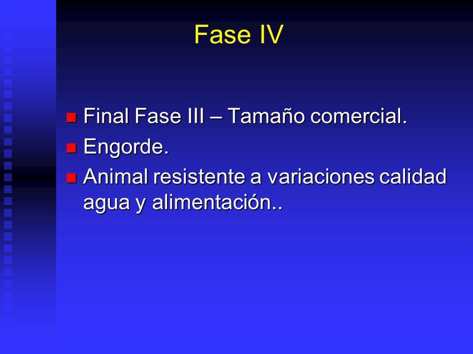 Fase III Fin fase II – alcanza tamaño (1-3 cm) en que es suficientemente resistente para sobrevivir condiciones naturales. Fin fase II – alcanza tamañ