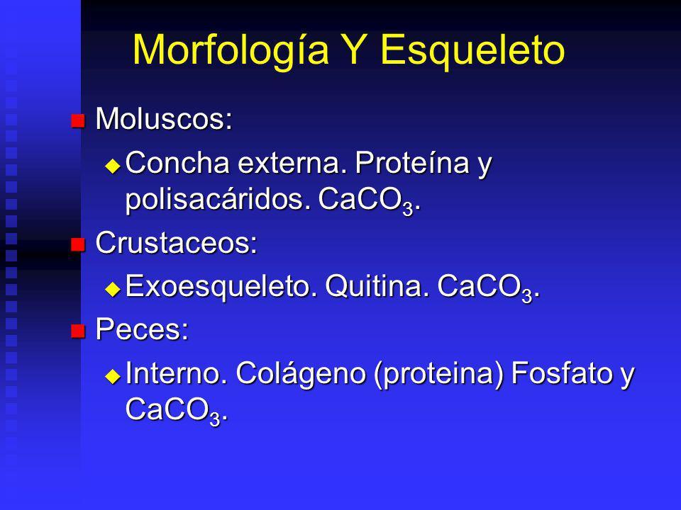 Morfología Y Esqueleto Moluscos: Moluscos: Concha externa.