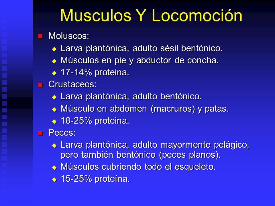 Musculos Y Locomoción Moluscos: Moluscos: Larva plantónica, adulto sésil bentónico.