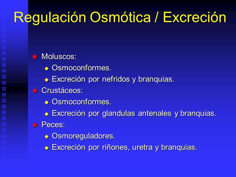 Regulación Osmótica / Excreción Moluscos: Moluscos: Osmoconformes.