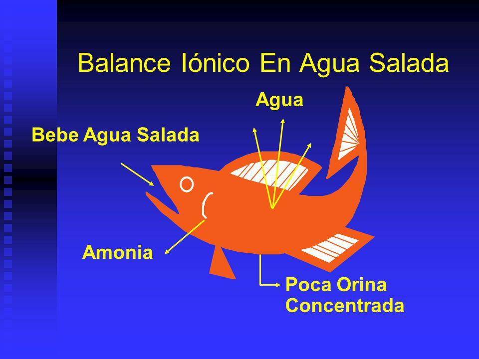 Balance Iónico En Agua Salada Poca Orina Concentrada Amonia Agua Bebe Agua Salada