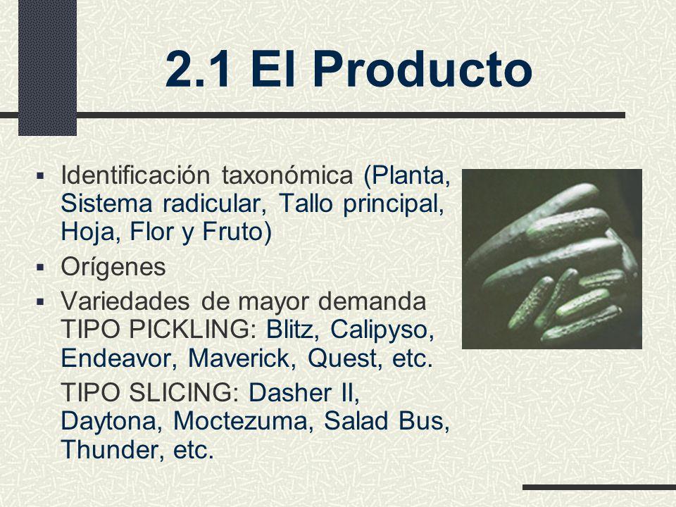 2.1 El Producto Identificación taxonómica (Planta, Sistema radicular, Tallo principal, Hoja, Flor y Fruto) Orígenes Variedades de mayor demanda TIPO PICKLING: Blitz, Calipyso, Endeavor, Maverick, Quest, etc.