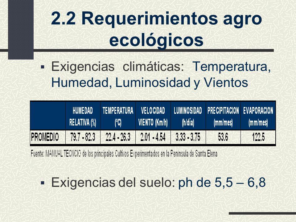 2.2 Requerimientos agro ecológicos Exigencias climáticas: Temperatura, Humedad, Luminosidad y Vientos Exigencias del suelo: ph de 5,5 – 6,8