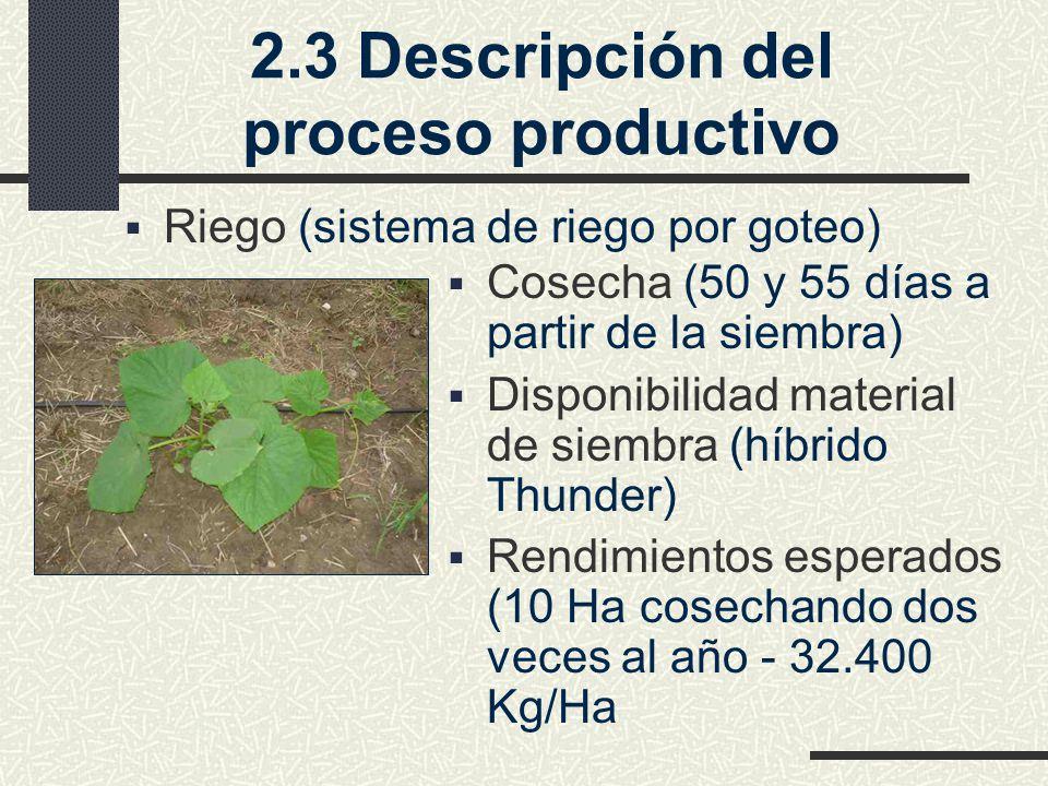2.3 Descripción del proceso productivo Riego (sistema de riego por goteo) Cosecha (50 y 55 días a partir de la siembra) Disponibilidad material de siembra (híbrido Thunder) Rendimientos esperados (10 Ha cosechando dos veces al año - 32.400 Kg/Ha