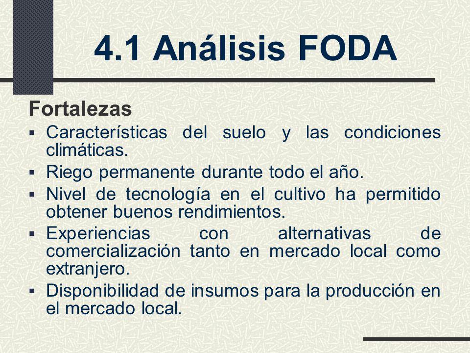 4.1 Análisis FODA Fortalezas Características del suelo y las condiciones climáticas.