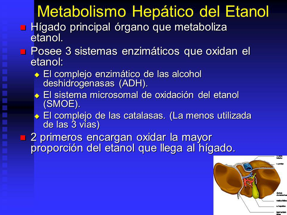 Metabolismo Hepático del Etanol Hígado principal órgano que metaboliza etanol. Hígado principal órgano que metaboliza etanol. Posee 3 sistemas enzimát