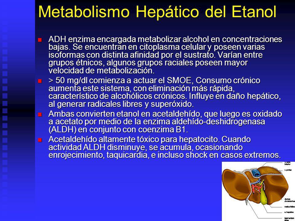 Metabolismo Hepático del Etanol ADH enzima encargada metabolizar alcohol en concentraciones bajas. Se encuentran en citoplasma celular y poseen varias