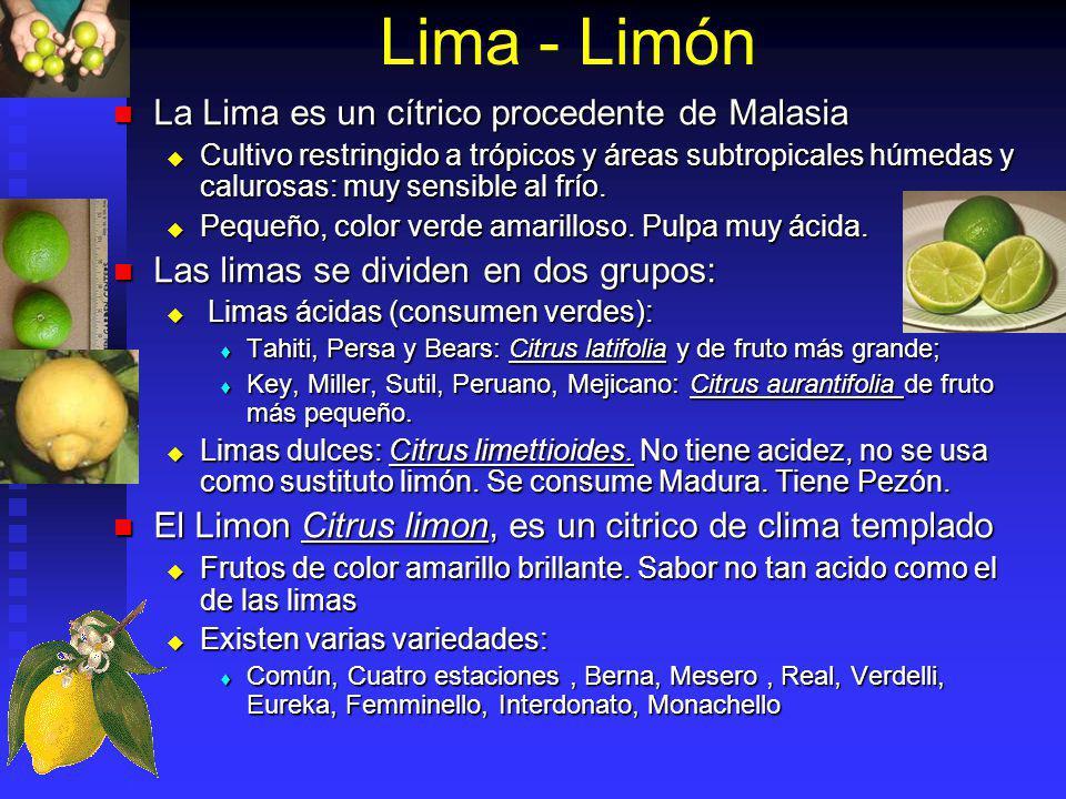 Lima - Limón La Lima es un cítrico procedente de Malasia La Lima es un cítrico procedente de Malasia Cultivo restringido a trópicos y áreas subtropica