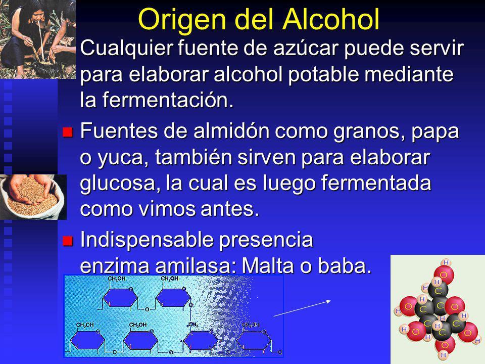 Origen del Alcohol Cualquier fuente de azúcar puede servir para elaborar alcohol potable mediante la fermentación. Cualquier fuente de azúcar puede se
