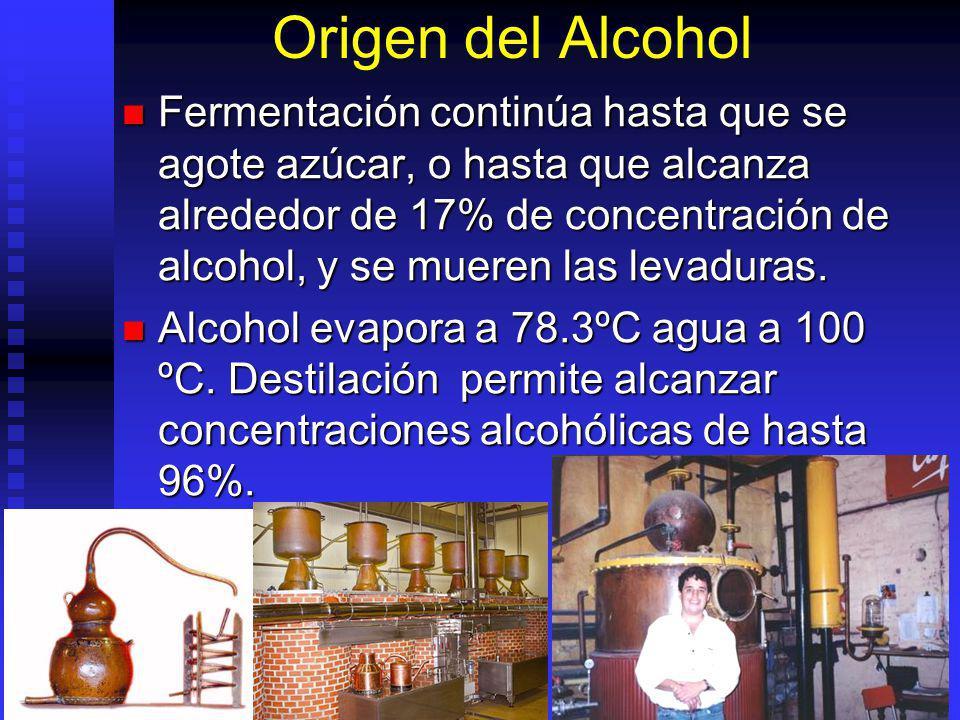 Origen del Alcohol Fermentación continúa hasta que se agote azúcar, o hasta que alcanza alrededor de 17% de concentración de alcohol, y se mueren las