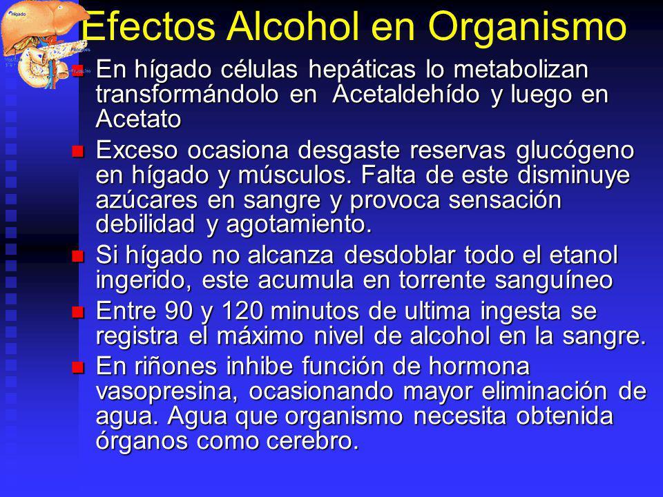 Efectos Alcohol en Organismo En hígado células hepáticas lo metabolizan transformándolo en Acetaldehído y luego en Acetato En hígado células hepáticas