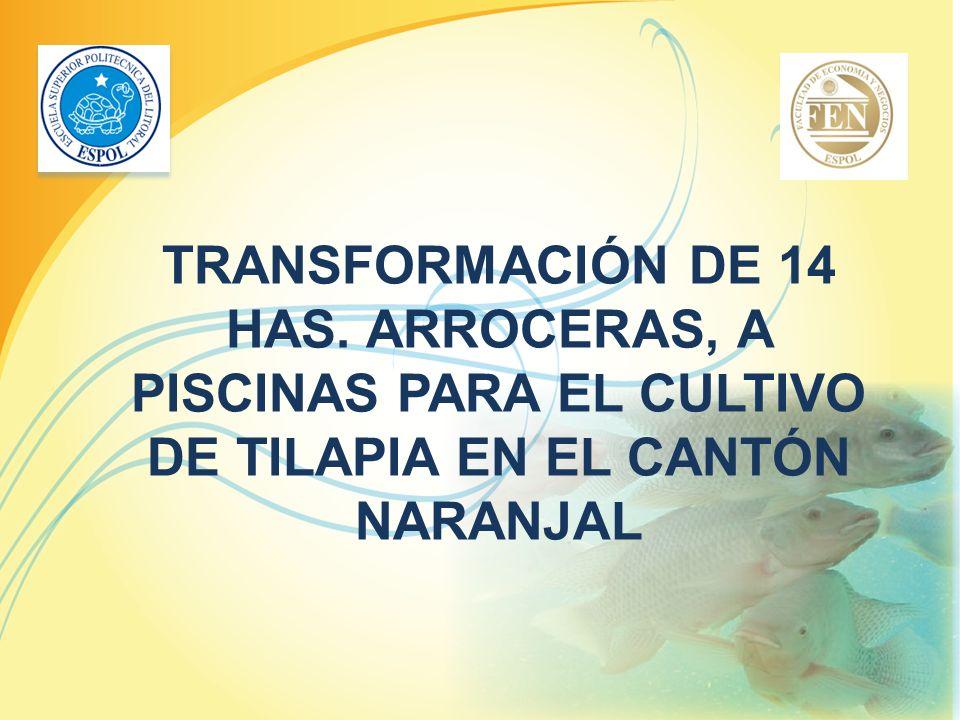 TRANSFORMACIÓN DE 14 HAS. ARROCERAS, A PISCINAS PARA EL CULTIVO DE TILAPIA EN EL CANTÓN NARANJAL
