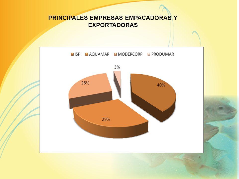LIDERES LATINOAMERICANOS EN LA EXPORTACION DE TILAPIA PAISKILOSUSD$US$/KG% ECUADOR1780,568$26.014,55$6,2149% COSTA RICA763,999$11.053,53$5,6420,82% HO