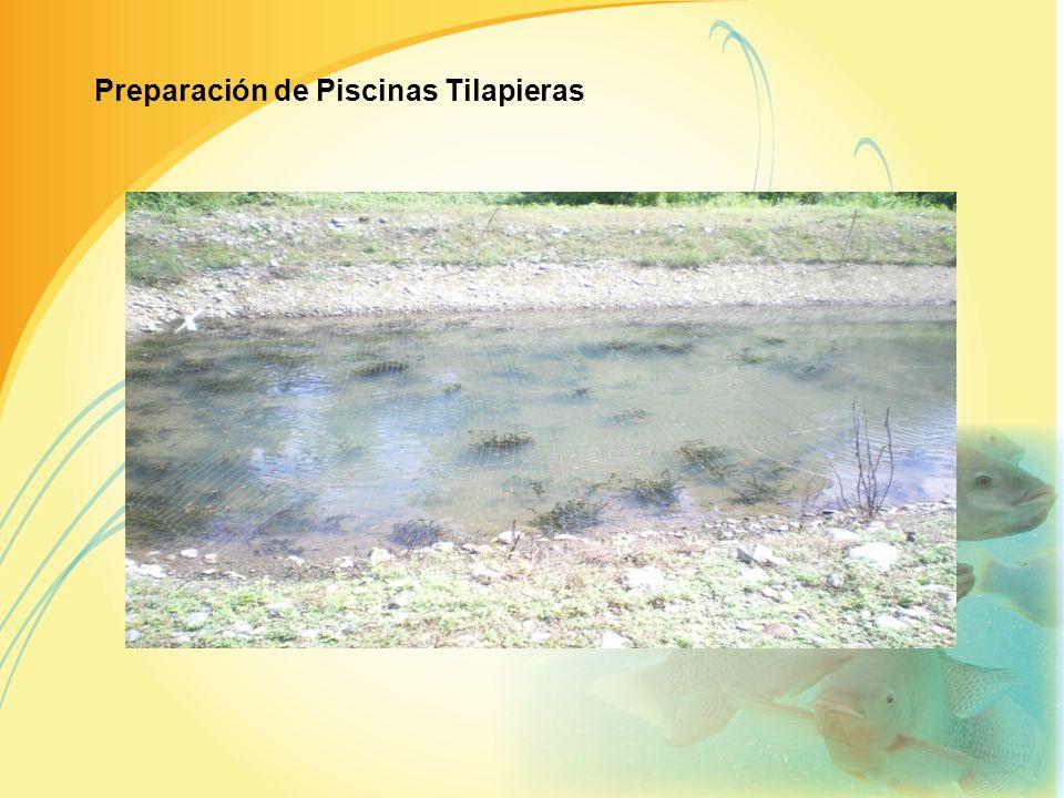LOCALIZACIÓN DEL PROYECTO Prov. del Guayas cantón Naranjal Tipos de piscinas Tilapieras Modelos de las Piscinas