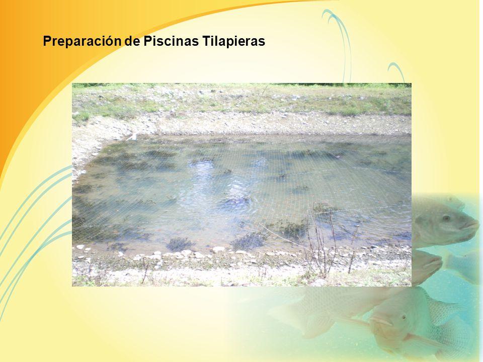 Preparación de Piscinas Tilapieras