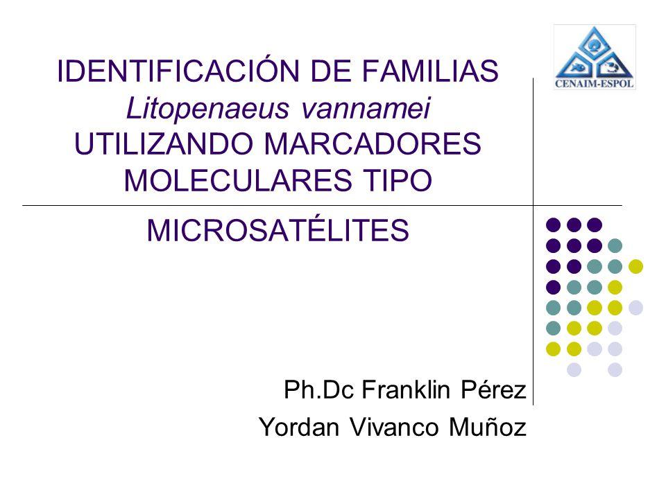 IDENTIFICACIÓN DE FAMILIAS Litopenaeus vannamei UTILIZANDO MARCADORES MOLECULARES TIPO MICROSATÉLITES Ph.Dc Franklin Pérez Yordan Vivanco Muñoz