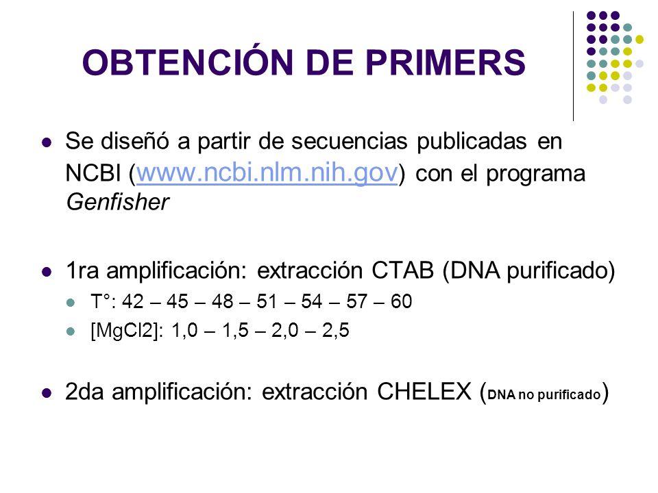 OBTENCIÓN DE PRIMERS Se diseñó a partir de secuencias publicadas en NCBI ( www.ncbi.nlm.nih.gov ) con el programa Genfisher www.ncbi.nlm.nih.gov 1ra a
