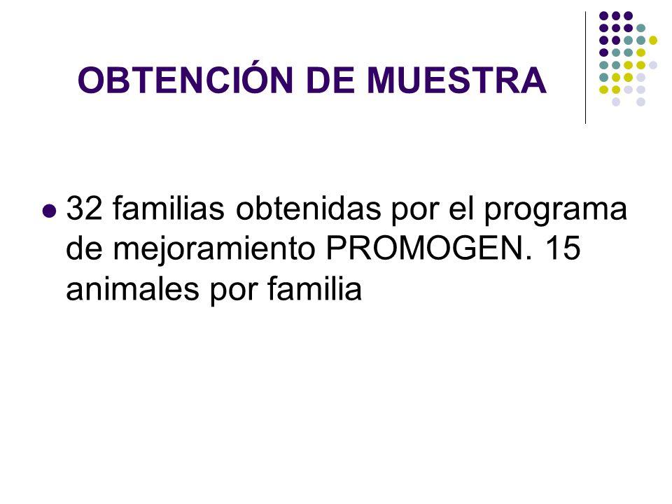 OBTENCIÓN DE MUESTRA 32 familias obtenidas por el programa de mejoramiento PROMOGEN. 15 animales por familia