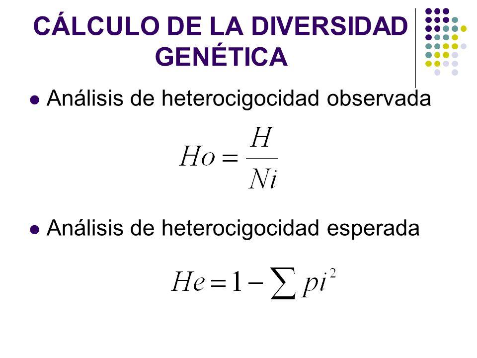 CÁLCULO DE LA DIVERSIDAD GENÉTICA Análisis de heterocigocidad observada Análisis de heterocigocidad esperada