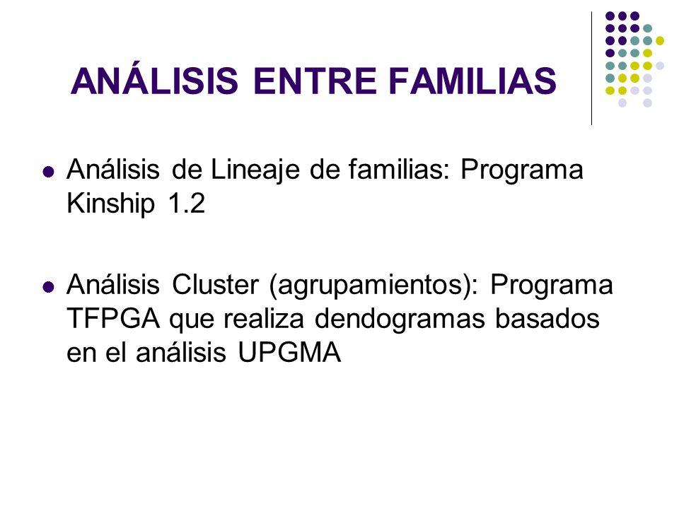 ANÁLISIS ENTRE FAMILIAS Análisis de Lineaje de familias: Programa Kinship 1.2 Análisis Cluster (agrupamientos): Programa TFPGA que realiza dendogramas