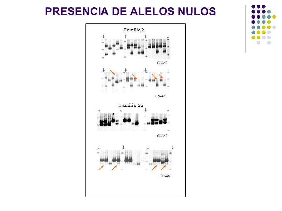 PRESENCIA DE ALELOS NULOS CN-67 CN-46 CN-67 CN-46 Familia 22 Familia 2