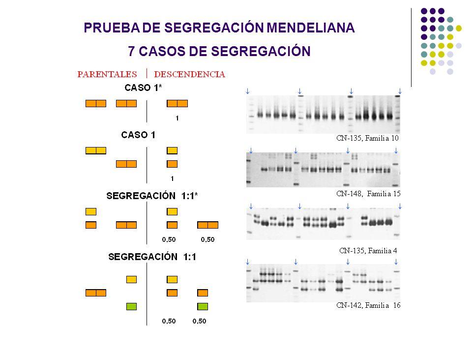 PRUEBA DE SEGREGACIÓN MENDELIANA 7 CASOS DE SEGREGACIÓN