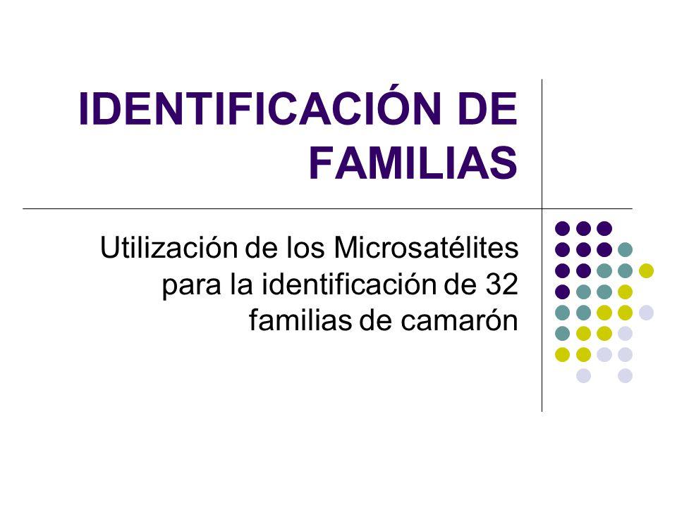 IDENTIFICACIÓN DE FAMILIAS Utilización de los Microsatélites para la identificación de 32 familias de camarón