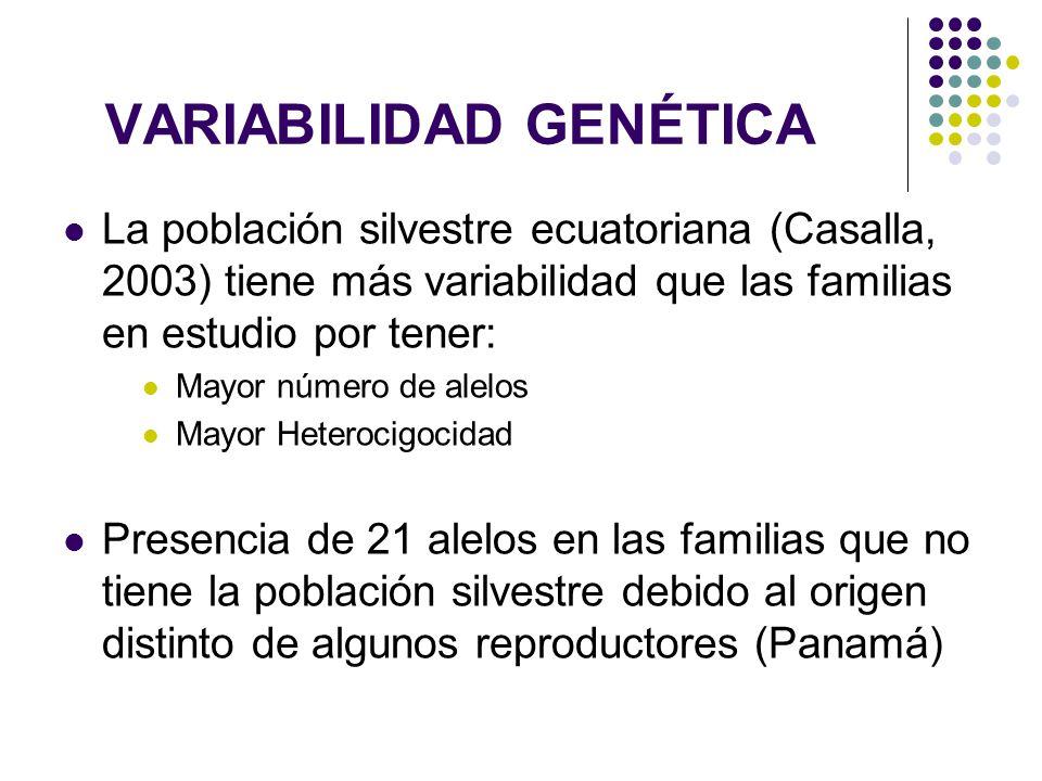 VARIABILIDAD GENÉTICA La población silvestre ecuatoriana (Casalla, 2003) tiene más variabilidad que las familias en estudio por tener: Mayor número de