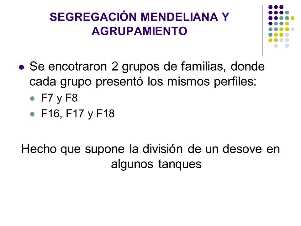 SEGREGACIÓN MENDELIANA Y AGRUPAMIENTO Se encotraron 2 grupos de familias, donde cada grupo presentó los mismos perfiles: F7 y F8 F16, F17 y F18 Hecho