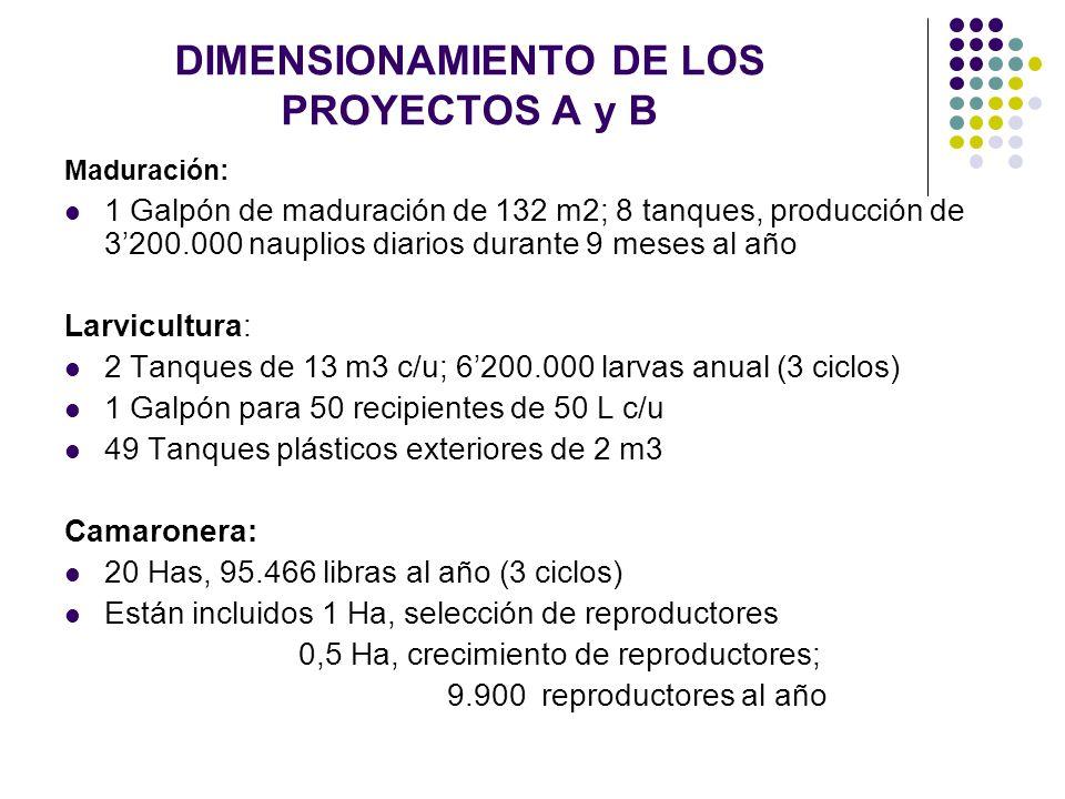 DIMENSIONAMIENTO DE LOS PROYECTOS A y B Maduración: 1 Galpón de maduración de 132 m2; 8 tanques, producción de 3200.000 nauplios diarios durante 9 mes
