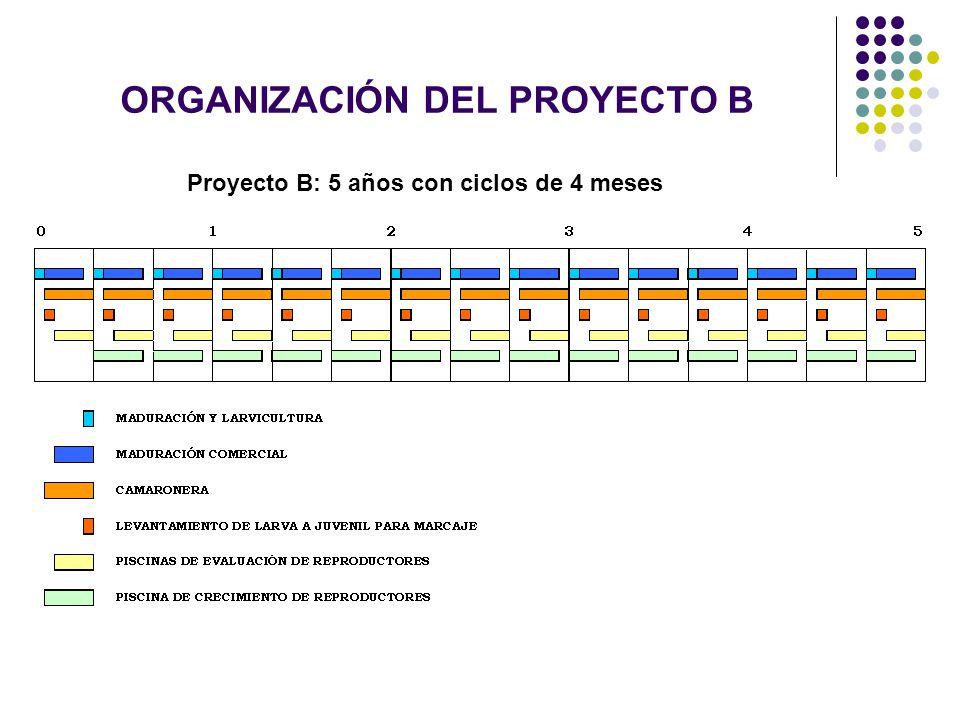 ORGANIZACIÓN DEL PROYECTO B Proyecto B: 5 años con ciclos de 4 meses