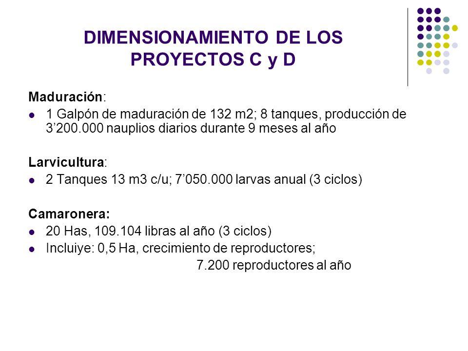 DIMENSIONAMIENTO DE LOS PROYECTOS C y D Maduración: 1 Galpón de maduración de 132 m2; 8 tanques, producción de 3200.000 nauplios diarios durante 9 mes