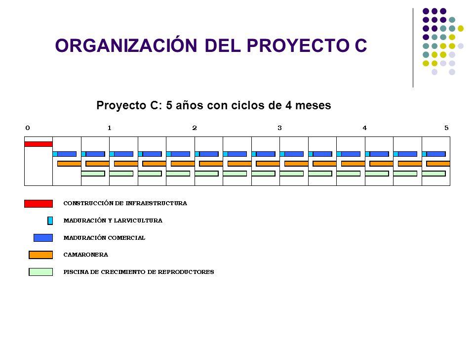 ORGANIZACIÓN DEL PROYECTO C Proyecto C: 5 años con ciclos de 4 meses