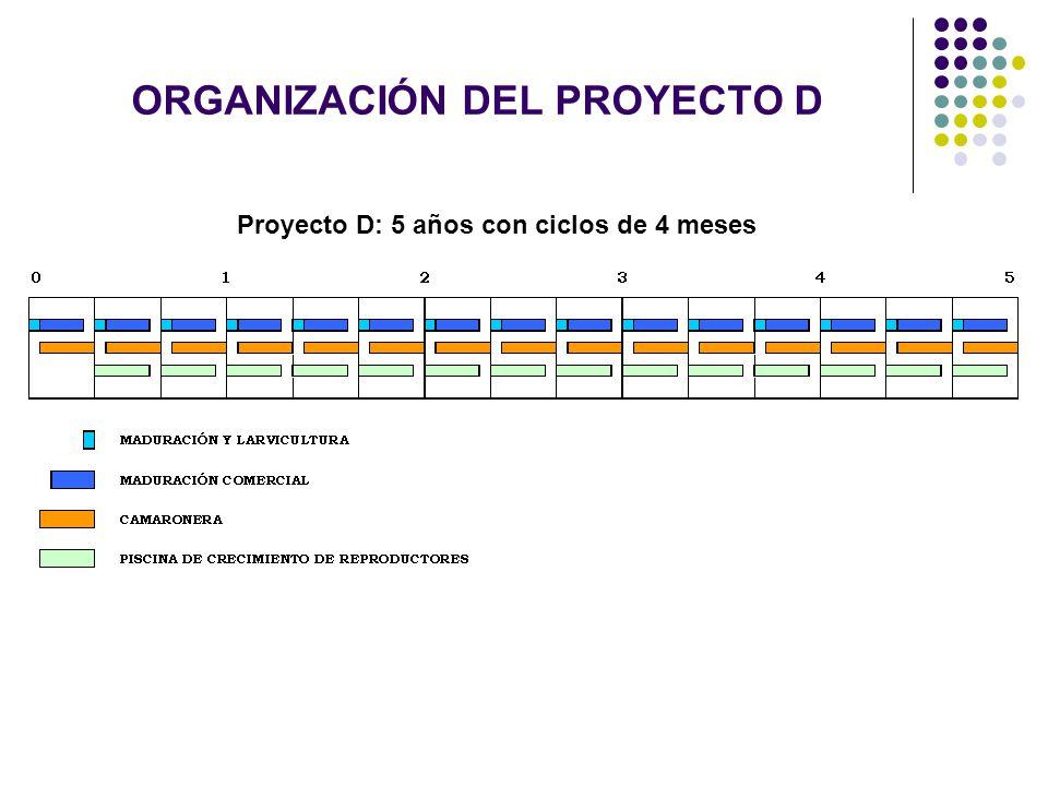 ORGANIZACIÓN DEL PROYECTO D Proyecto D: 5 años con ciclos de 4 meses