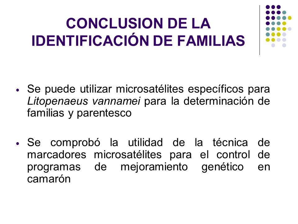 CONCLUSION DE LA IDENTIFICACIÓN DE FAMILIAS Se puede utilizar microsatélites específicos para Litopenaeus vannamei para la determinación de familias y