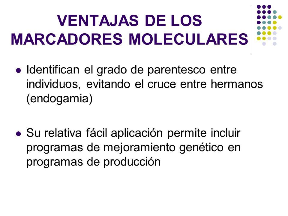 VENTAJAS DE LOS MARCADORES MOLECULARES Identifican el grado de parentesco entre individuos, evitando el cruce entre hermanos (endogamia) Su relativa f