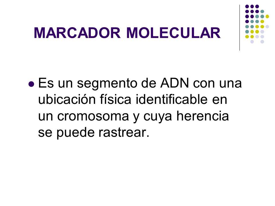 TIPOS DE MARCADORES MOLECULARES Marcador Dominante Marcador Codominante (Microsatélites)
