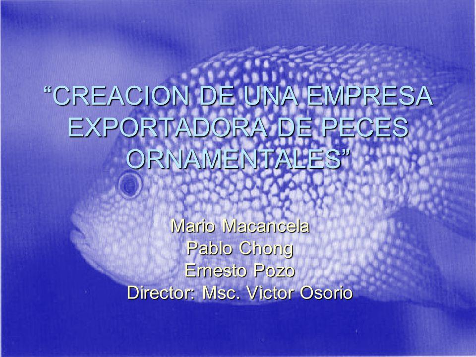 CREACION DE UNA EMPRESA EXPORTADORA DE PECES ORNAMENTALES Mario Macancela Pablo Chong Ernesto Pozo Director: Msc.