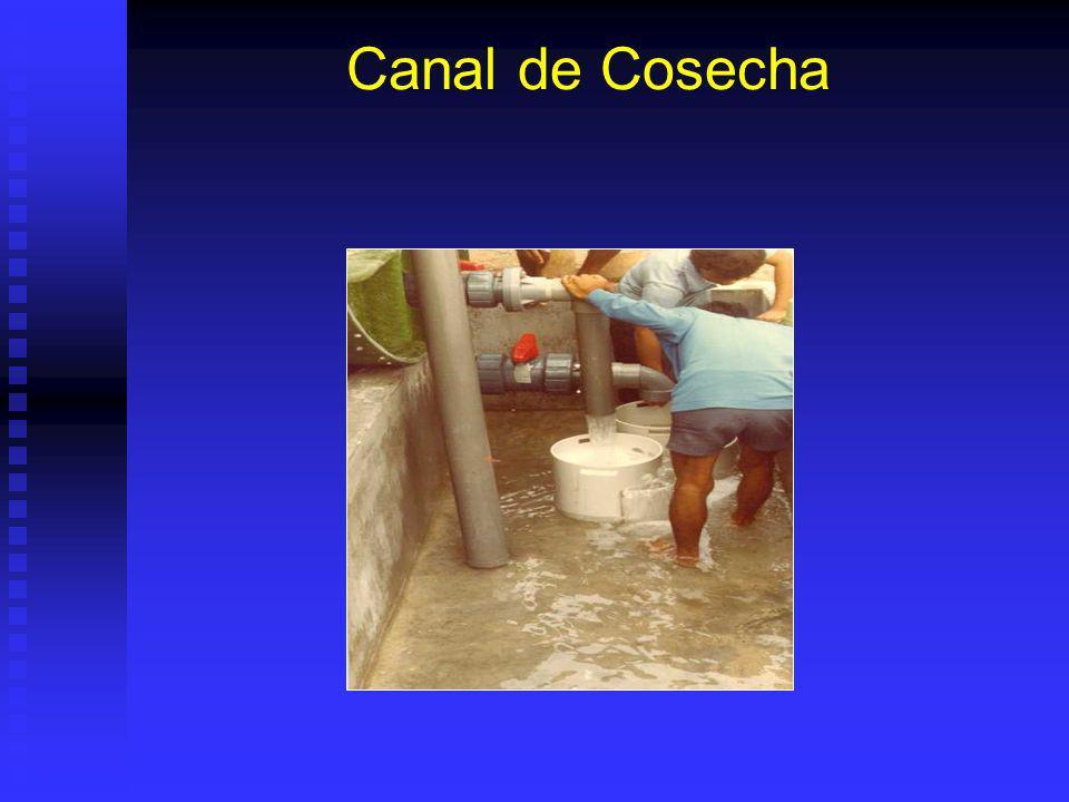Canal de Cosecha